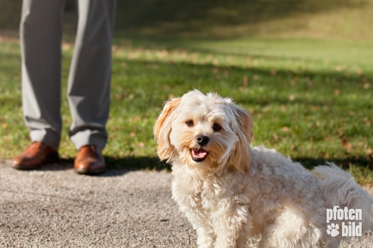 Hund und Halter