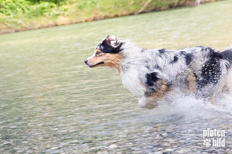 Aussie im Wasser