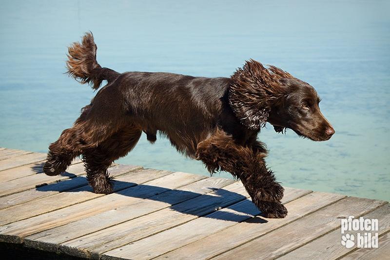 Hund im Lauf