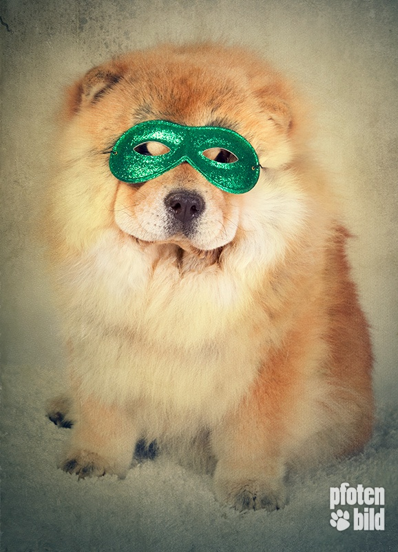 Chow-Chow mit Maske an Halloween