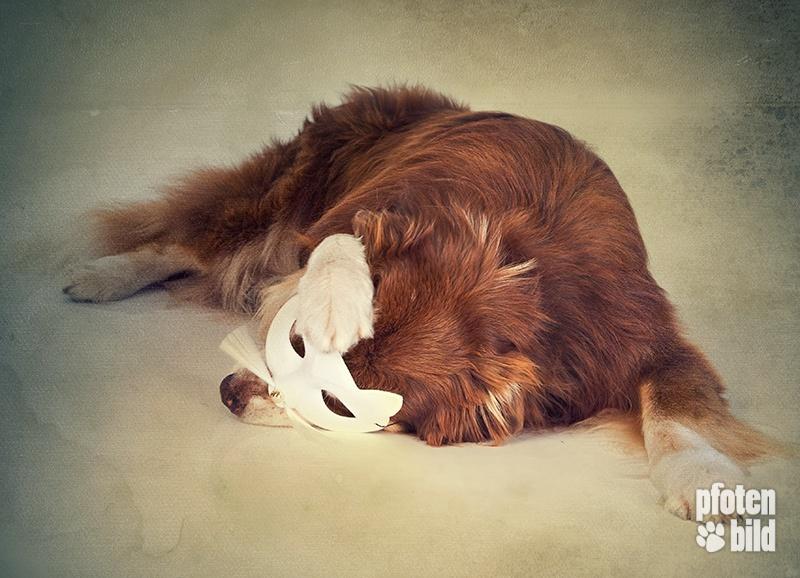 Halloween Hunde Fotoshooting im Studio