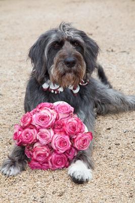 Hund Blumenkind