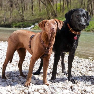 Hunde an der Isar