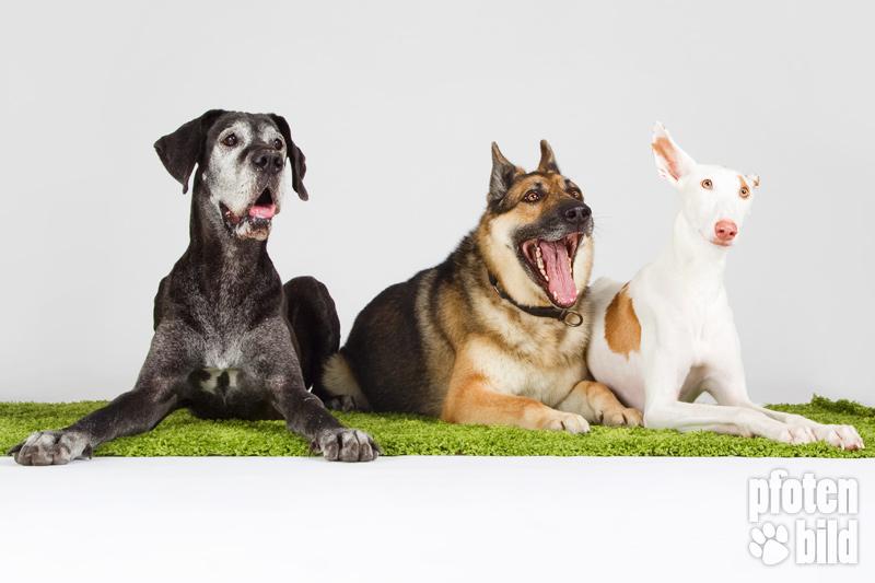 Hunde Studio