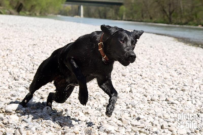 Hundefoto am Wasser
