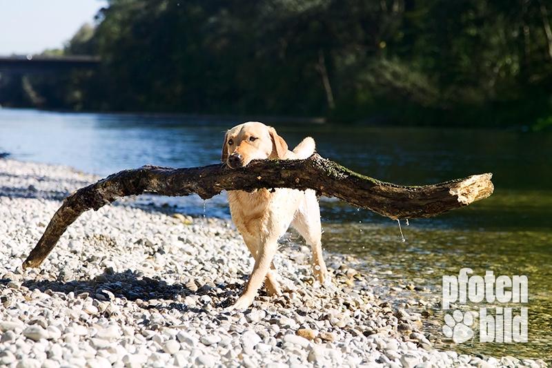 Hundefotografin an der Isar