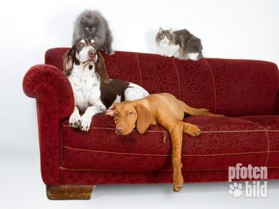 Katzen und Hunde auf dem Sofa