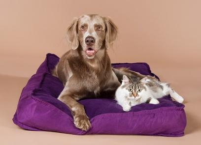Hund und Katze im Studio