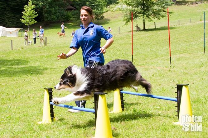 Hundeolympiade Weitsprung