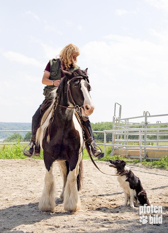 Reiterin mit Hund