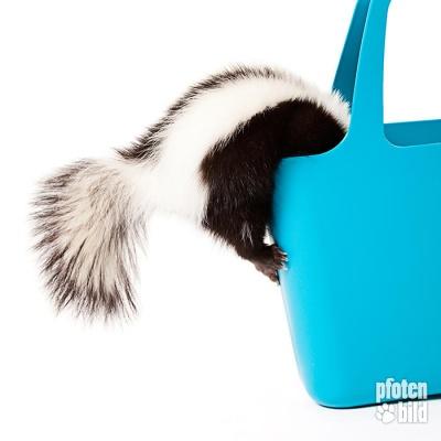 Stinktier+in+Tasche