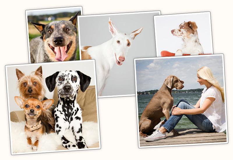 Pfotenbild Titelbild-Collage