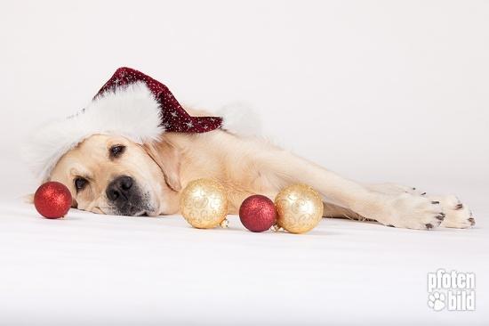 Weihnachts-Fotoshooting+mit+Hund