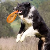 Actionfotos mit Hund