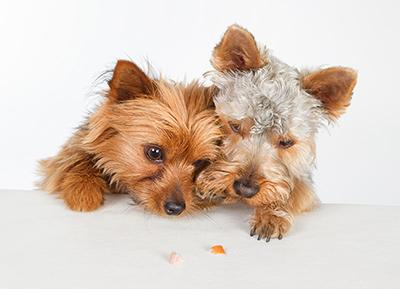 Zwei Hunde mit Leckerli